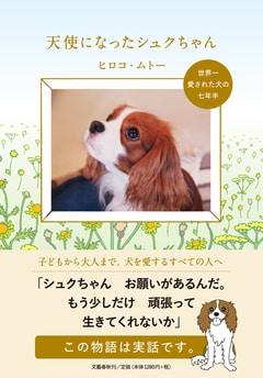 十年間、大切に保管された心臓病の犬と家族の「幸福な物語」