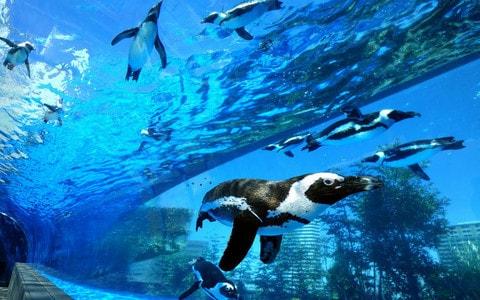 弱点だらけの水族館を再生する方法──水族館プロデューサー・中村元