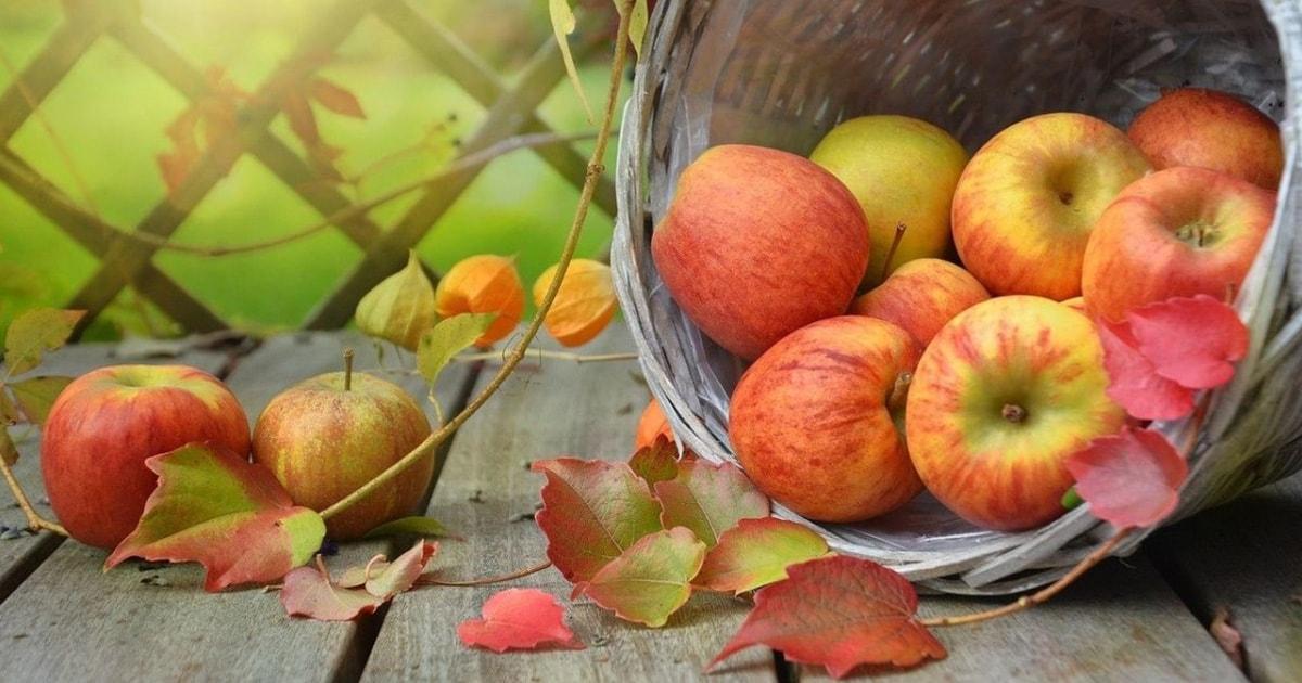 リンゴの国で出会ったもの――伊吹有喜